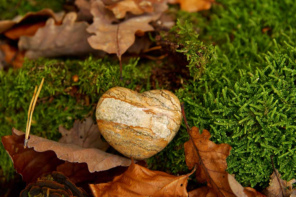 Heart sympathy or stone funeral heart near a tree in autumn.
