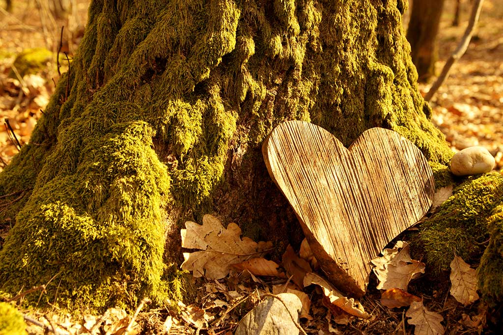 Natural burial grave in the forest